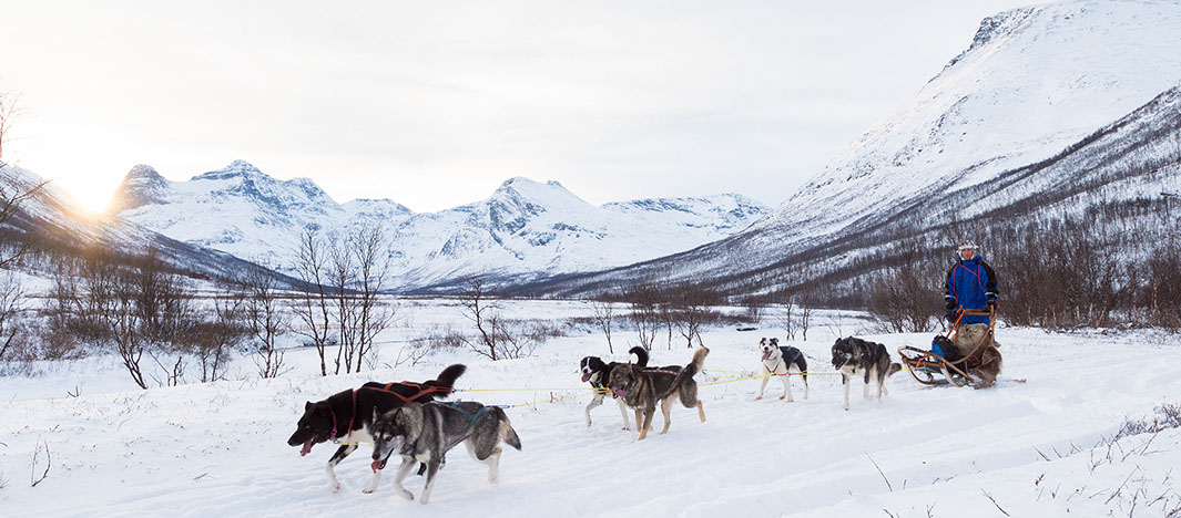 Dog sledding in Kjervelvdalen, a two hours drive from Tromsø